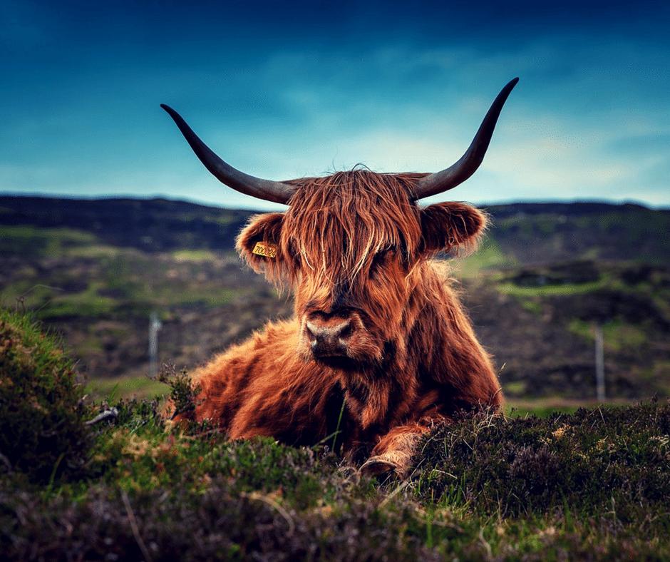 Self-Catering Scotland – Travel Destination Blog